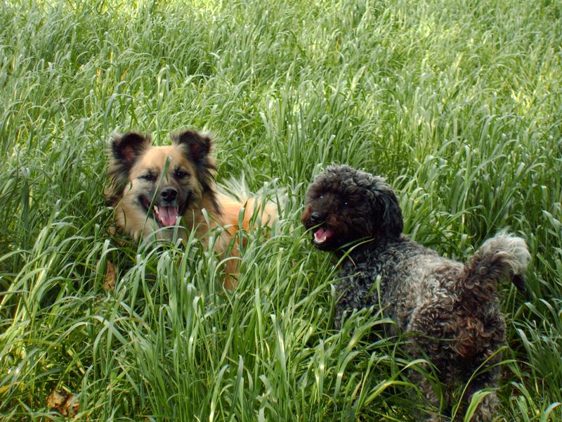 Teddy & Karla